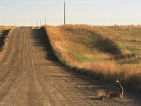 fort_peck-33