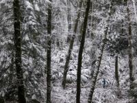 2012_12_labarge-68