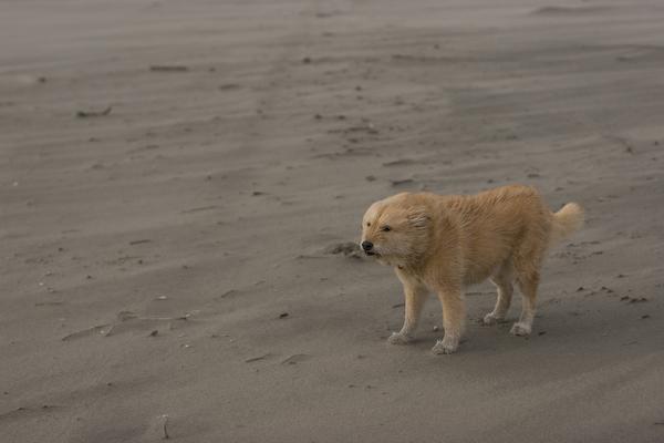 2008_0131_coast-59-1.jpg