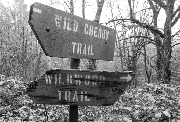 Running My Age on the Wildwood Trail